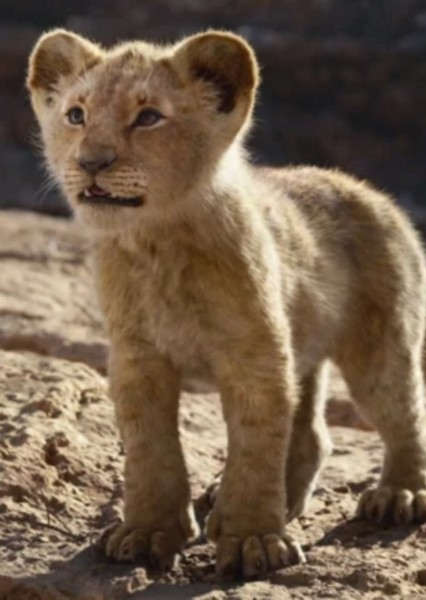 JD McCrary as Young Simba in The Lion King