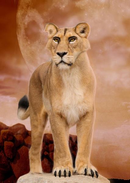 Kovu Fan Casting For The Lion King 2 Simba S Pride Mycast Fan Casting Your Favorite Stories